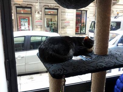 Neko Cat Café