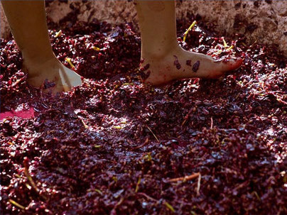 Le raisin est mur pour la vendange de la terre, il est foulé dans la grande cuve de la colère de Jéhovah Dieu. Le raisin est écrasé.
