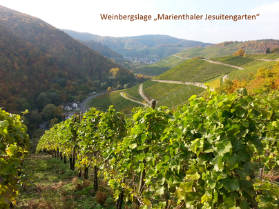 """Im Onlineshop gibt es einige Weine aus den besten Lagen an der Ahr, so auch aus der Weinbergslage """"Marienthaler Jesuitengarten""""."""
