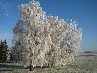 Advent auf dem Hof Ganal, Schnaps, Obstler Bodensee