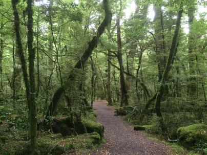 Forêt du lac Gunn