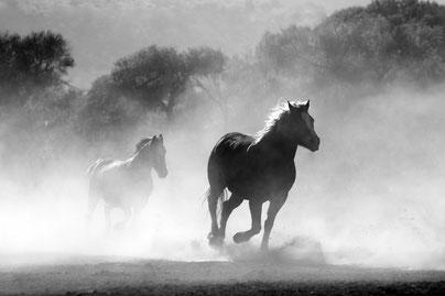 Pferdeliebhaber Tierkommunikation lernen