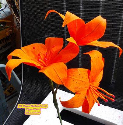 Tigerlilien - Tiger Lilies