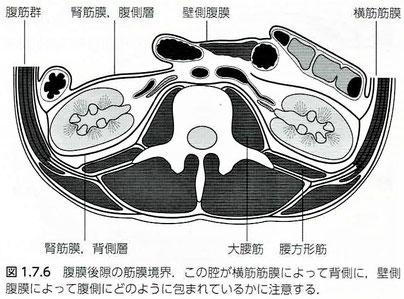 腹膜後隙の筋膜境界