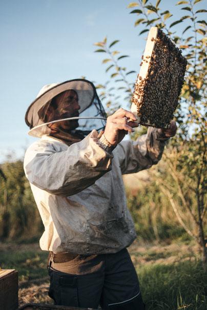 Mathieu Audo apiculteur transhumant miel pain d'épices pollen