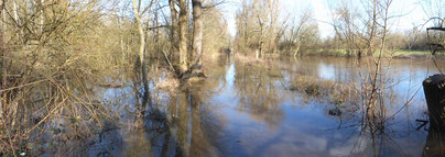 Überschwemmter Weiherwald  Februar 2020 (C.Buchta)