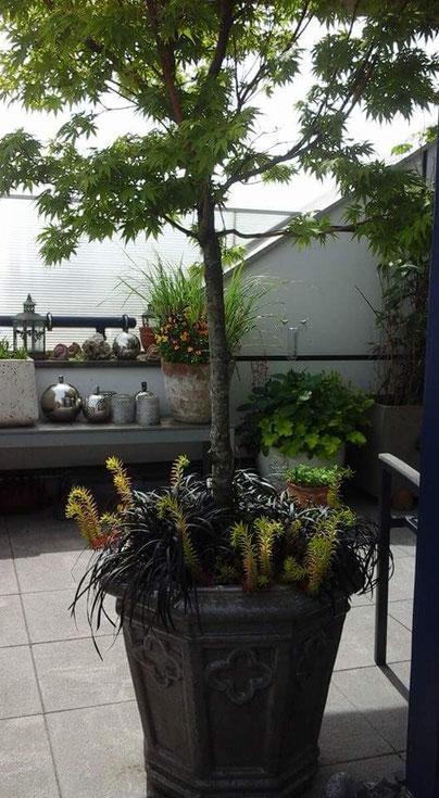 Der Balkon und der Garten - Ihr Ort der Erholung - Immergrün Berlin