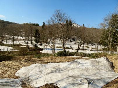 沼の原湿原は雪だらけ。