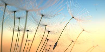 Blütenstände im leichten Wind in der Abenddämmerung