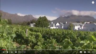 """""""Essen und Wein in Südafrika - Eine kulinarische Reise"""" auf YouTube entdecken!"""