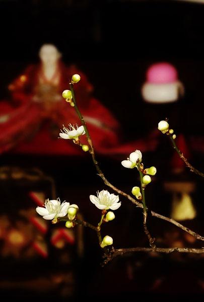 春の予感山菜料理ふきのとうこごみたらの芽こしあぶらわらびなのはなわさびなこんてつあいこ