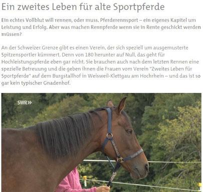 SWR aktuell_Landesschau_Bericht über den Verein Zweites Leben für Sportpferde