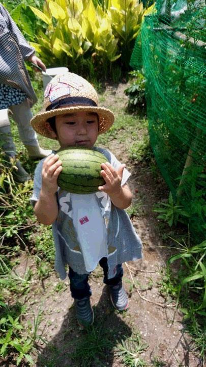 スイカを持った子供の写真