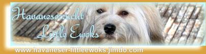 Banner von Havaneser Züchter/Welpen/Würfe Little Ewoks