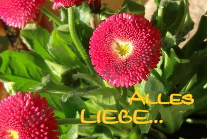E 1  Alles Liebe  /gelb