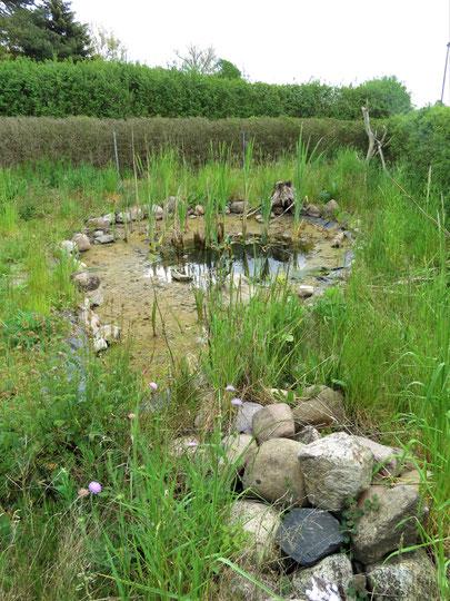 fast ausgetrockneter Teich