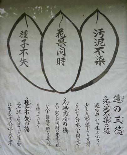 """""""""""蓮の三徳""""ハスは三つの徳をもっているそうです。"""