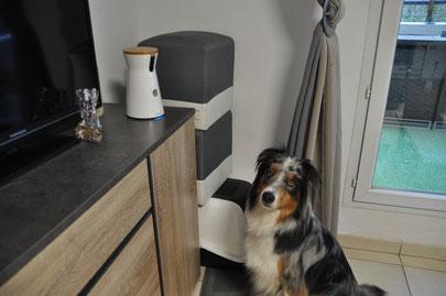 Furbo, test de la caméra furbo dog caméra, avis furbo, caméra, surveillance chien, laisser son chien seul à la maison, que fait mon chien quand je ne suis pas là