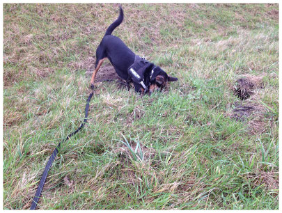 Hund buddelt Christine Middendorf Hundepsychologin nTR