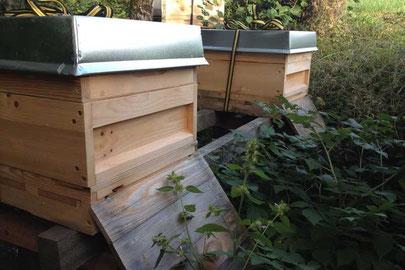 Bienen Patenschaft Völker