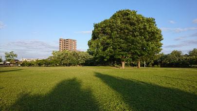 三重県松阪 鈴の森公園 笑いヨガ(ラフターヨガ) 大きな木の下に集合!