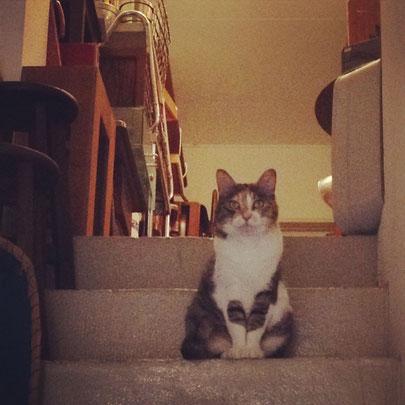 ネコのスミレ