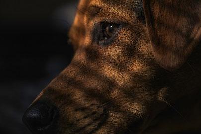 Pourquoi Lhomme Frappe Son Chien Educateur Canin Charente