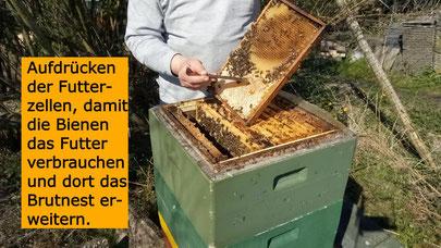#Bienenvolk #Wabe