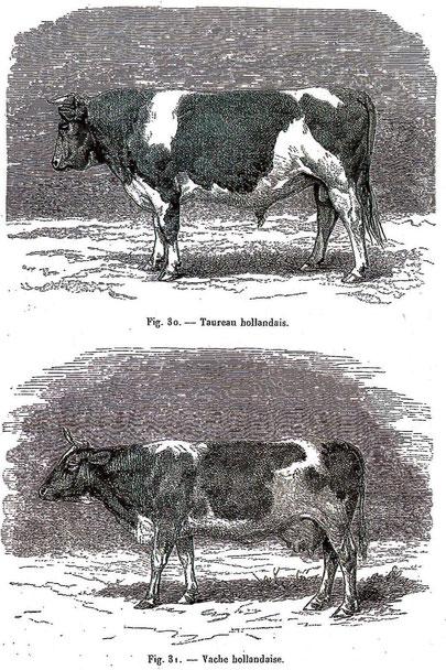 """Illustration : M. Boitel - Concours régional de Lille - 1870 : """"Notice sur le département du Nord"""""""