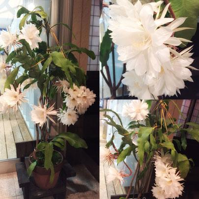 月下美人 花ひろ 鯖江市市議会選挙 御祝 花