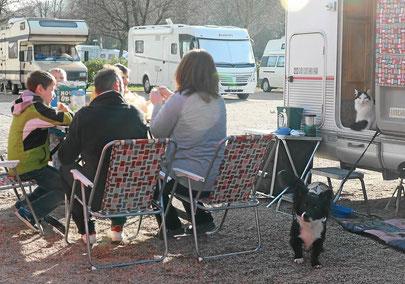 Stellplatz beim Campingplatz Lörrach, Hunde und Katzen erlaubt