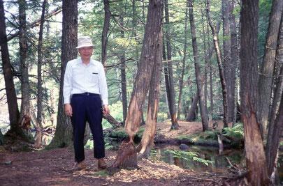 ニュー・ハンプシャーのサマー・ハウス、ビーバーのがじった木