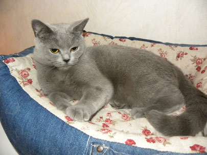 Bonnie, 2 Jahre (Foto: 31.7.2014)