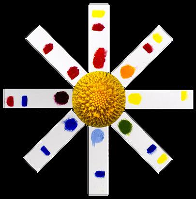 Цветовая ромашка