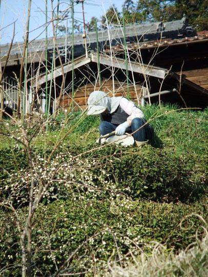 Au jardin, on cueille les herbes pour le repas du soir