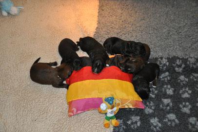 Wir drücken 24 Pfoten für Deutschland :)