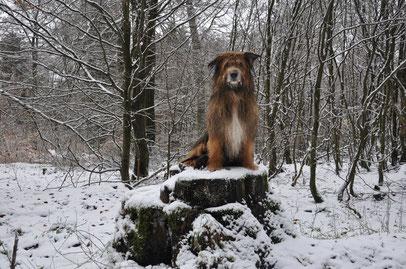 Auch unser König der Löwen war dabei :)