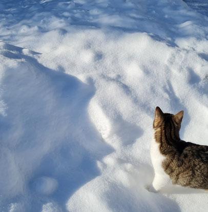 Schnee, Schnee, Schnee...wohin ich seh!