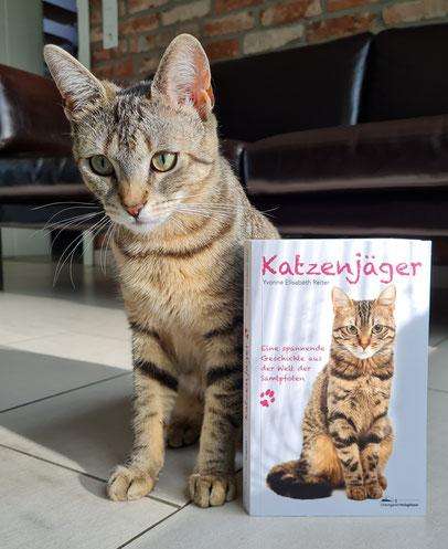 """Die Katze auf dem Coverbild vom Krimi """"Katzenjäger"""" könnte doch glatt mit Katzen Fibi verwandt sein!"""