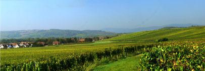 Le Vignoble d'Ergersheim