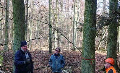 Bootsbauer Röder erläutert die Wahl der Bäume.