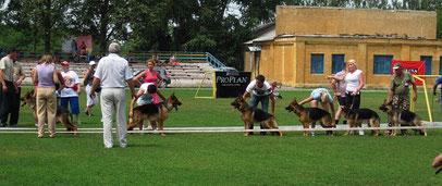 класс юниоров-кобелей,первые 6 собак