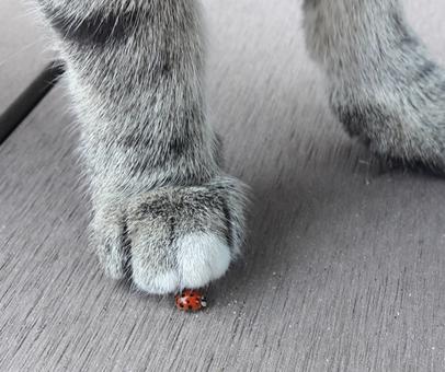 Vor Kurzem hat Hermine einen Marienkäfer gefunden - hoffentlich ein Glücksbringer!