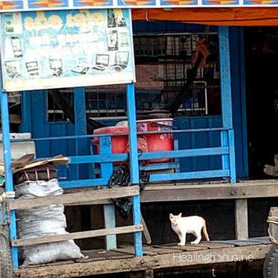 ボートに住んでる猫inカンボジア