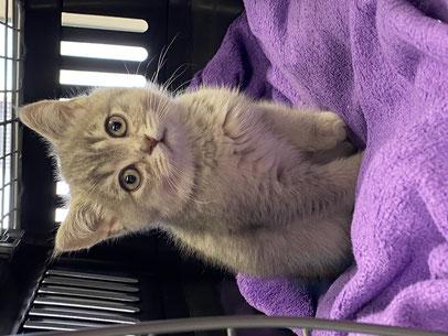 Inzwischen betrifft der Welpenhandel auch immer mehr Katzen.