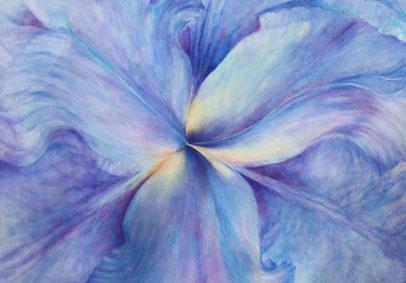 Iris  Öl auf Leinwand 70x100cm