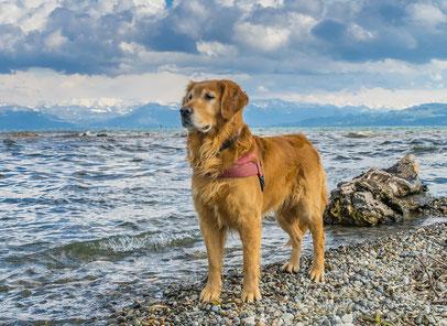 Ferienwohnung mit Hund in Langenargen