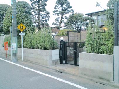 ギンマサキ生垣