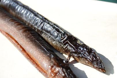 Geräuchterte Aale