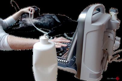 Mobiles Ultraschallgerät (Foto: Tierärztin Svea Lucas)